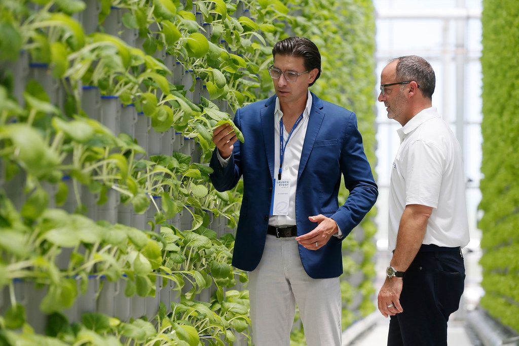 In June 2018, Eden Green Technology co-chair Jaco Booyens and co founder Eric Schick checked the bok choy at the company's vertical farm in Cleburne.