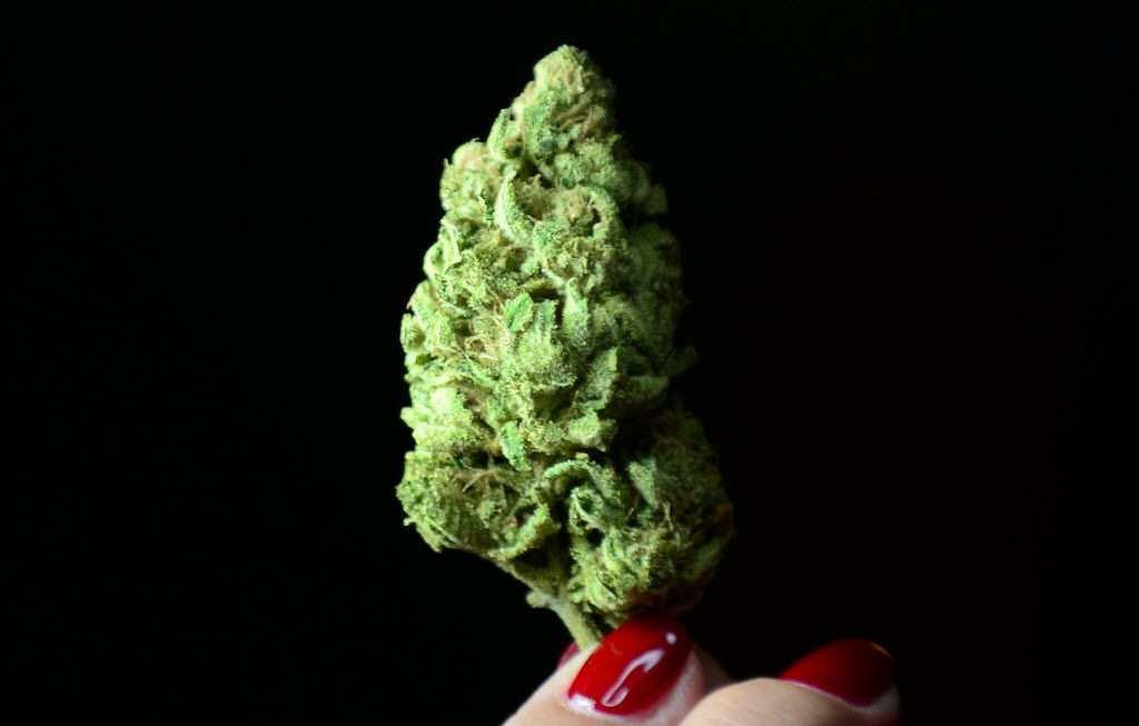 (FILES) This file photo taken on July 27, 2012 shows a bud of marijuana in Los Angeles, California.   Voters in California will decide whether to legalize recreational marijuana in November, after the necessary signatures to put the measure on the ballot were garnered, officials said June 28, 2016. Secretary of State Alex Padilla said proponents had turned in more than the  nearly 366,000 signatures needed for the bill to qualify.  / AFP PHOTO / FREDERIC J. BROWNFREDERIC J. BROWN/AFP/Getty Images