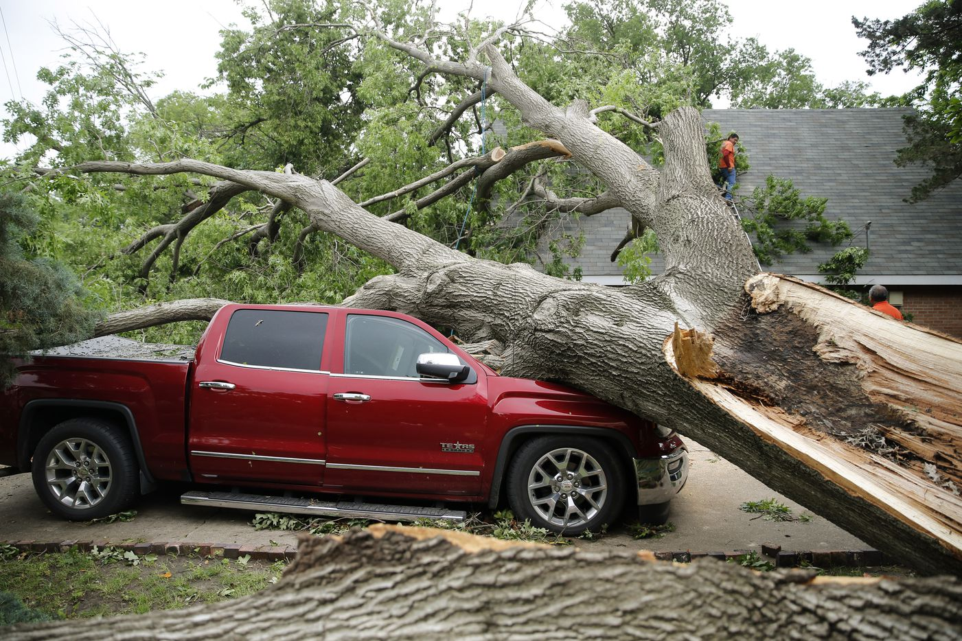 Red oak tree that was planted in 1963 sits atop a truck and a house after a tornado passed through in Denton, Texas on Wednesday, May 1, 2019. (Vernon Bryant/The Dallas Morning News)