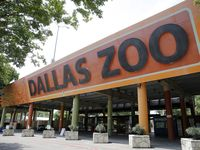 The Dallas Zoo reopened May 29 after closing in mid-March due to the coronavirus pandemic.