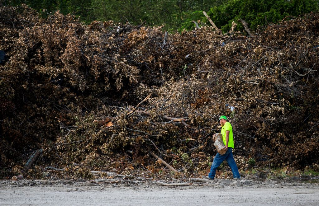 A worker adds a log to a large pile of debris collected after recent storms  at a temporary collection site near the intersection of  Highway 75 and Interstate 635 in Dallas. Recent storms have caused an unusually large amount of tree damage.
