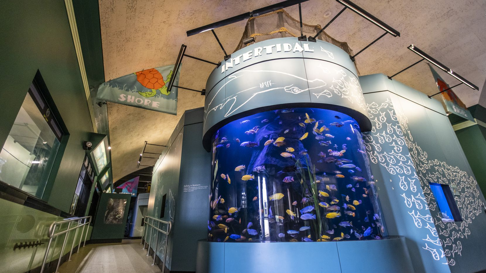 Rift cichlids swim Wednesday in the Intertidal exhibit just inside the entrance to the Children's Aquarium at Fair Park in Dallas. A City Council vote Wednesday could be the first step in finding a new operator for the facility, which has been closed for 15 months.