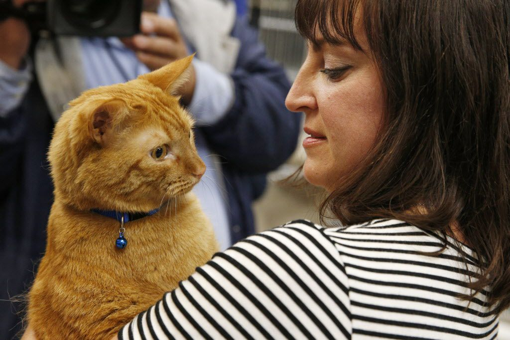 Jackie Ewer from Lakewood, Colorado is reunited with her cat, Harvey, at Dallas Animal Services in Dallas on April 2, 2017. Harvey disappeared from his Denver home last June was recently pulled from a 25-foot hole from a construction site near Highland Park(Nathan Hunsinger/The Dallas Morning News)