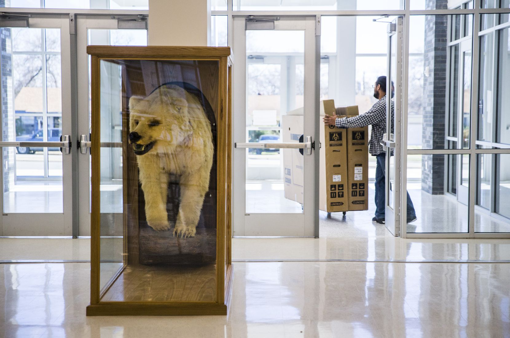 A taxidermy bear is displayed in the new front entrance of South Oak Cliff High School on Thursday, December 19, 2019 in Dallas. Workers are finishing a two-year, $52 million renovation to the campus. (Ashley Landis/The Dallas Morning News)