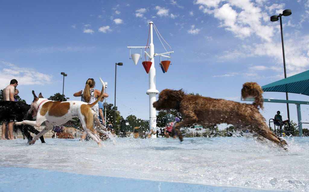 Many area swimming pools close the season with dog splash parties.