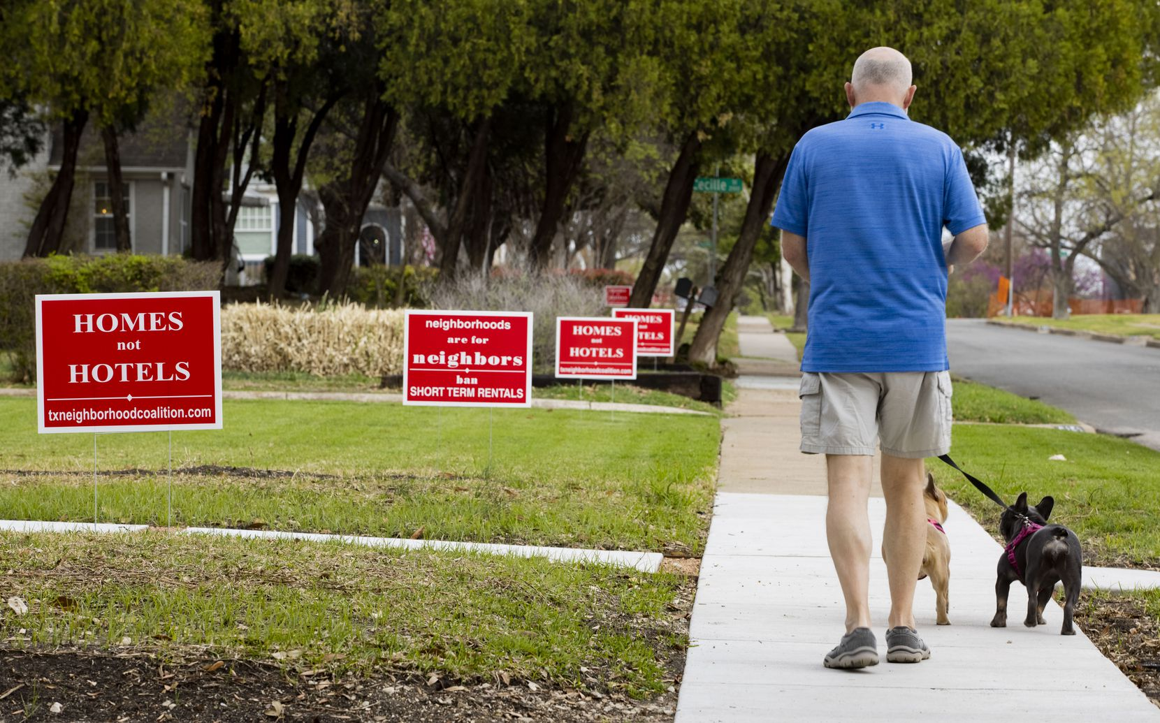 Dale Harwell walks his dogs Nellie and Sophie along Prospect Avenue in Dallas' Edgemont Park Conservation District on Wednesday. Harwell is one of the many homeowners who has signs in his front yard protesting short-term rental properties in his neighborhood.
