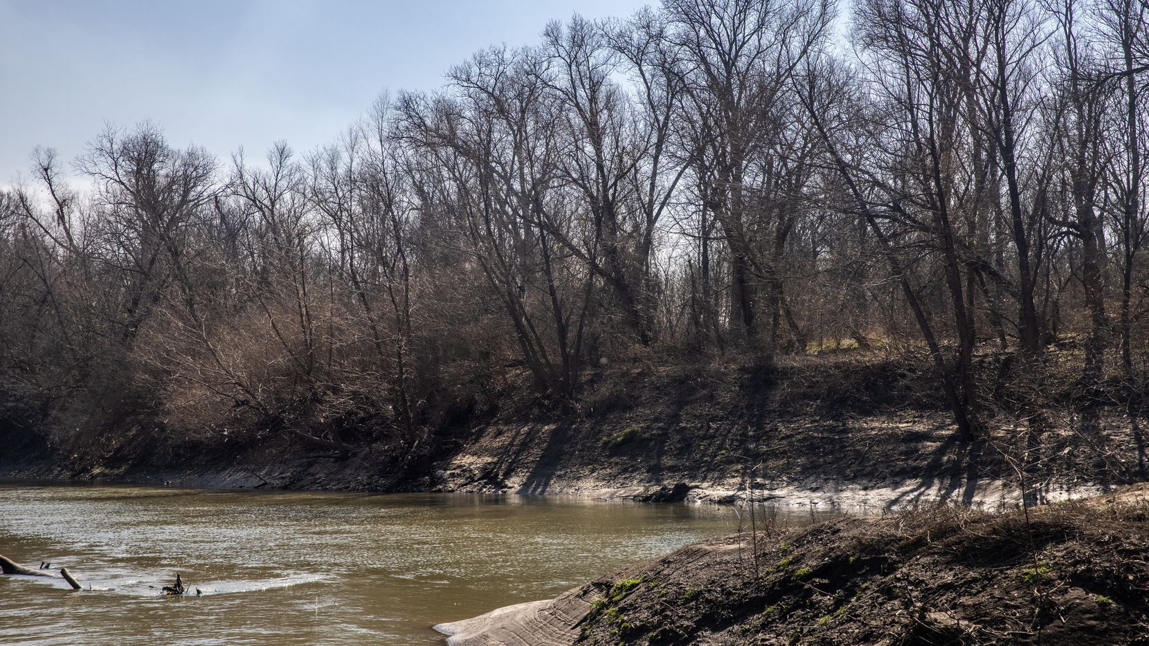 Dormant ash and willow trees line the banks where White Rock Creek meets the Trinity River in the epicenter of the Great Trinity Forest.