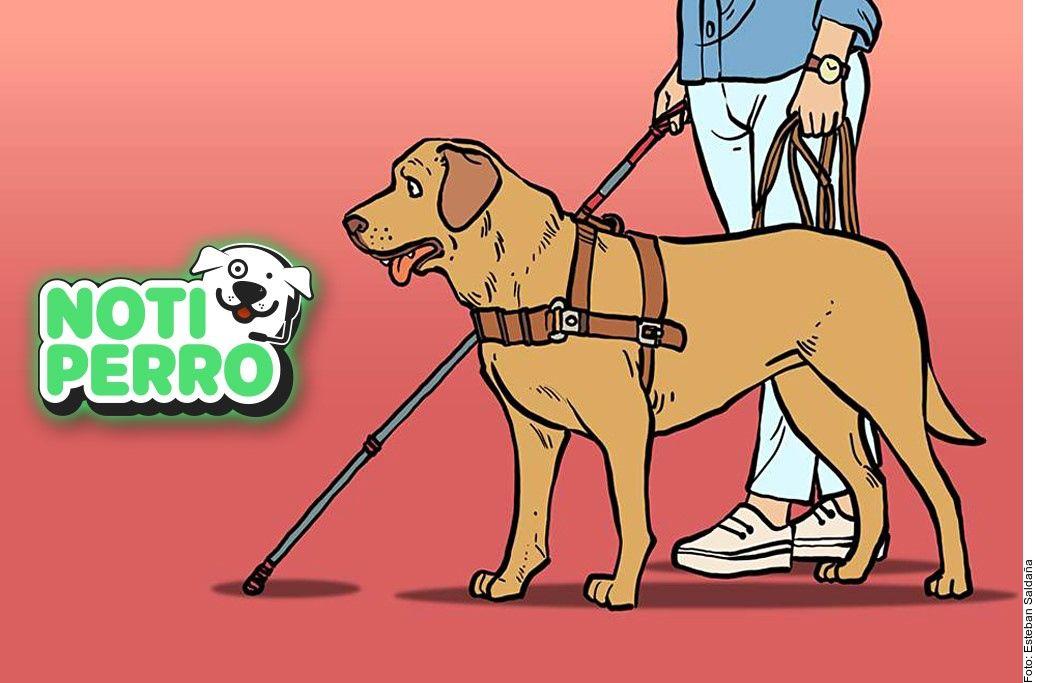 Los perros guía o de asistencia ayudan a discapacitados y a personas con ciertas enfermedades.