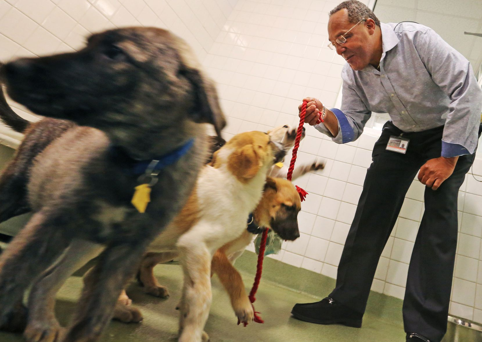 New Dallas City Council member Kevin Felder visits with some puppies as he stops by the Dallas Animal Services shelter to talk about his possible pilot program to train homeless people to catch and train dogs, photographed on Wednesday, July 19, 2017. (Louis DeLuca/The Dallas Morning News)