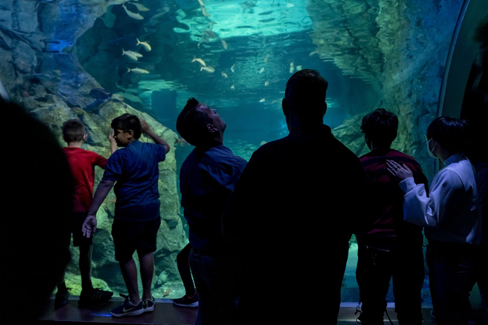 Dallas City Council member Adam Bazaldua, center left, and Dallas Park and Recreation board member Daniel Wood were among scores of visitors Wednesday to the St. Louis Aquarium at Union Station. The St Louis facility, like the Children's Aquarium at Fair Park, is located in an area of historical significance to the city.