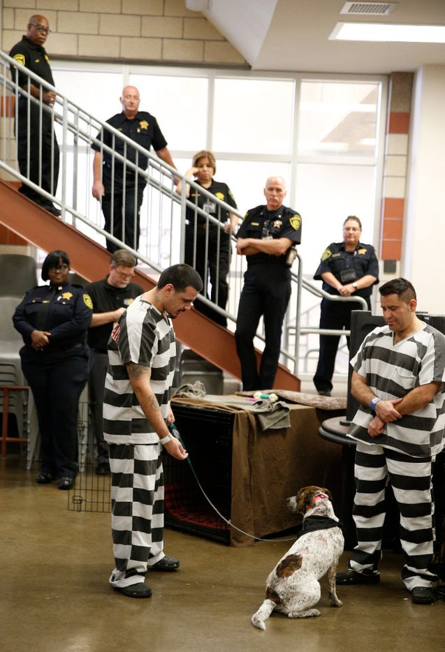 Dallas County inmate Darrell Johnson works with Diamond next to Raymond Avila as Dallas Sherriffs look on at Kays Tower Jail in Dallas on March 29, 2017. (Nathan Hunsinger/The Dallas Morning News)