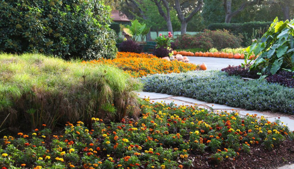 The Richardson Senior Center is offering virtual tours of the Dallas Arboretum this fall and winter.