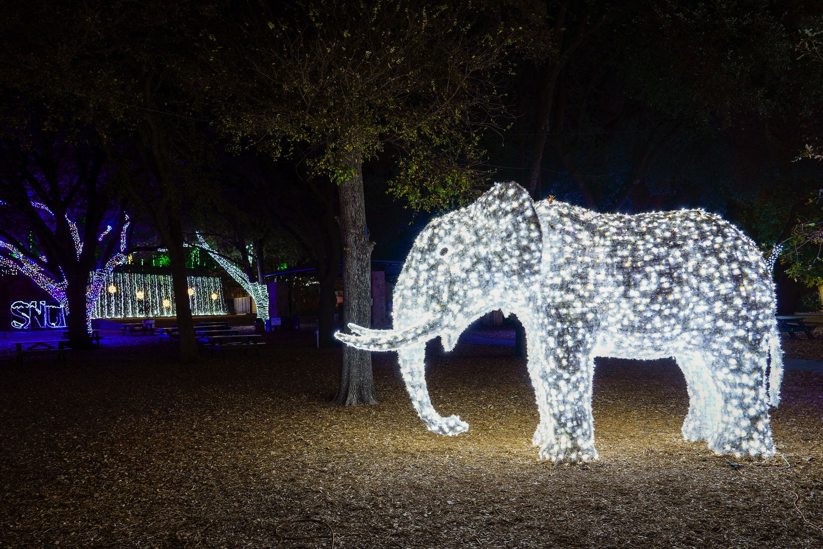 A light display in the shape of an elephant is seen along the side of the route during Dallas Zoo Lights on Wednesday, Nov. 18, 2020, in Dallas. The Dallas Zoo?s display of one million lights and silk-covered, animal-shaped, lanterns is presented as a drive-through this year.  (Smiley N. Pool/The Dallas Morning News)