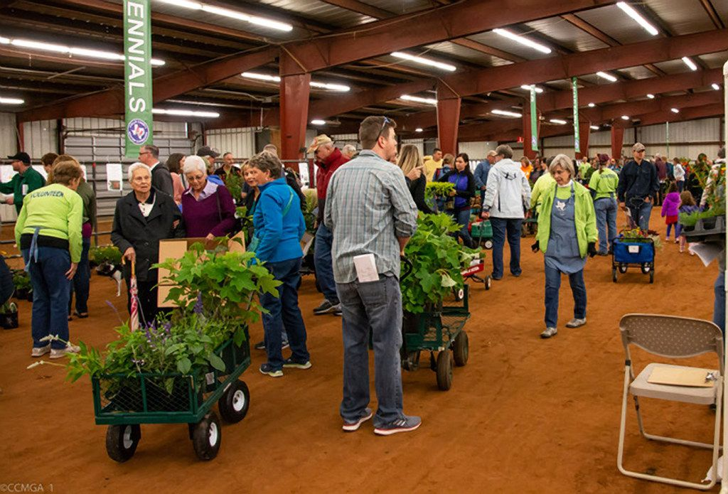 The 16th annual CCMGA plant sale offers hundreds of varieties of plants as well as native hardwood mulch and compost.