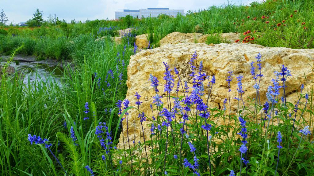 The 14-acre Bluestem Park in Fort Worth was restored to its original Blackland Prairie state, with 50 native plant species and 500 native trees and shrubs.
