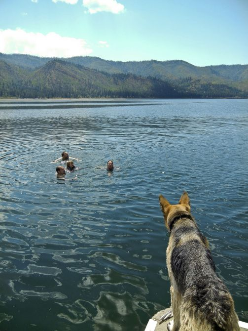 Dogs are permitted on pontoon boats on Vallecito Lake, a natural lake 18 miles east of Durango.