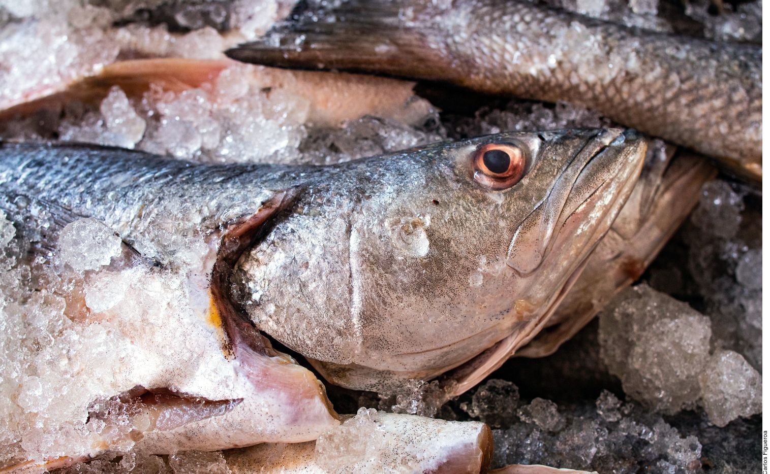 """La esencia de la carne roja se vincula con lo mundano, mientras que la de la carne blanca es volátil, de sangre fría, propia de lo aéreo o acuático"""", según el doctor Alberto Peralta de Legarreta."""