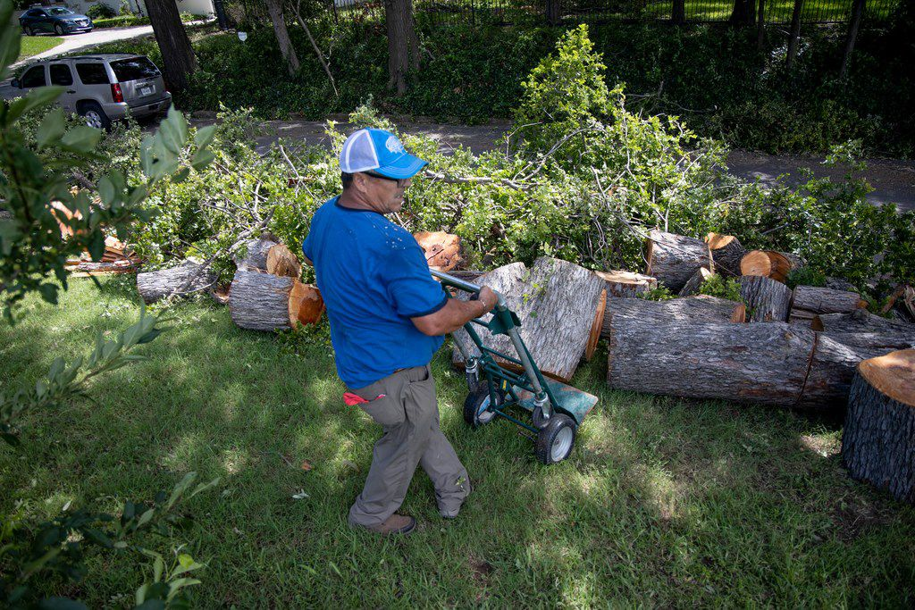 Isidro Medrano works to remove a tree near White Rock Lake in Dallas on Monday, June 10, 2019. Strong storms produced widespread damage throughout Dallas-Fort Worth, causing more than 200,000 people to lose power.
