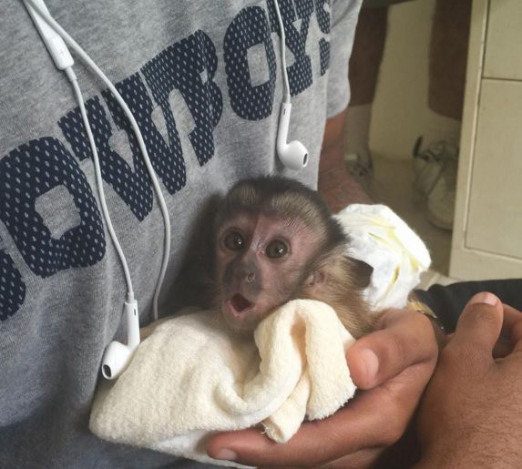 Dez Bryant's pet monkey, Dallas Bryant. Photo from Dez Bryant's Instagram  page.