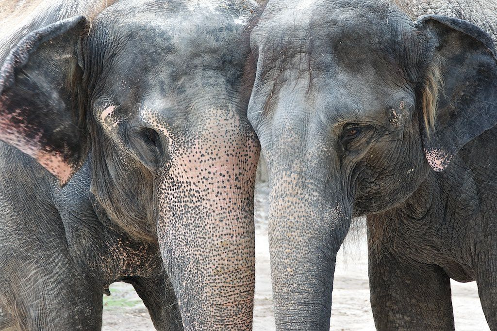 "Posing elephants at the Fort Worth Zoo in Scott Keeling's photo ""Putting Their Heads Together."""