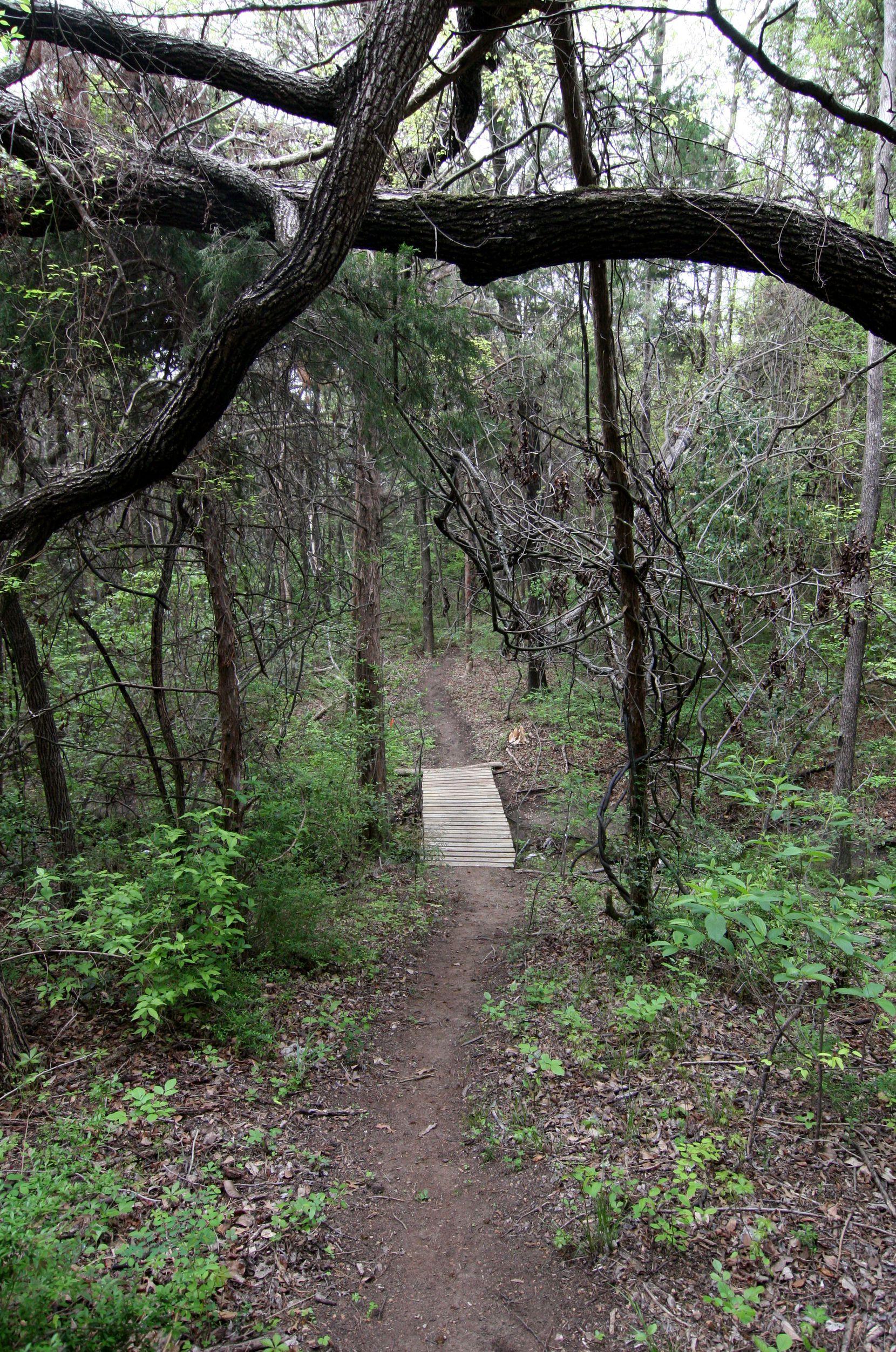Oak Cliff Nature Preserve tiene 121 acres de bosques.