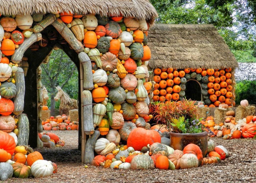 Más de 90,000 calabazas forman parte del festival anual otoñal del Dallas Arboretum. (CORTESÍA/cortes´IA Dallas Arboretum)