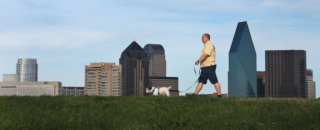 A man and dog go for a walk on the Trinity River levee in West Dallas, with the downtown Dallas skyline in the background.