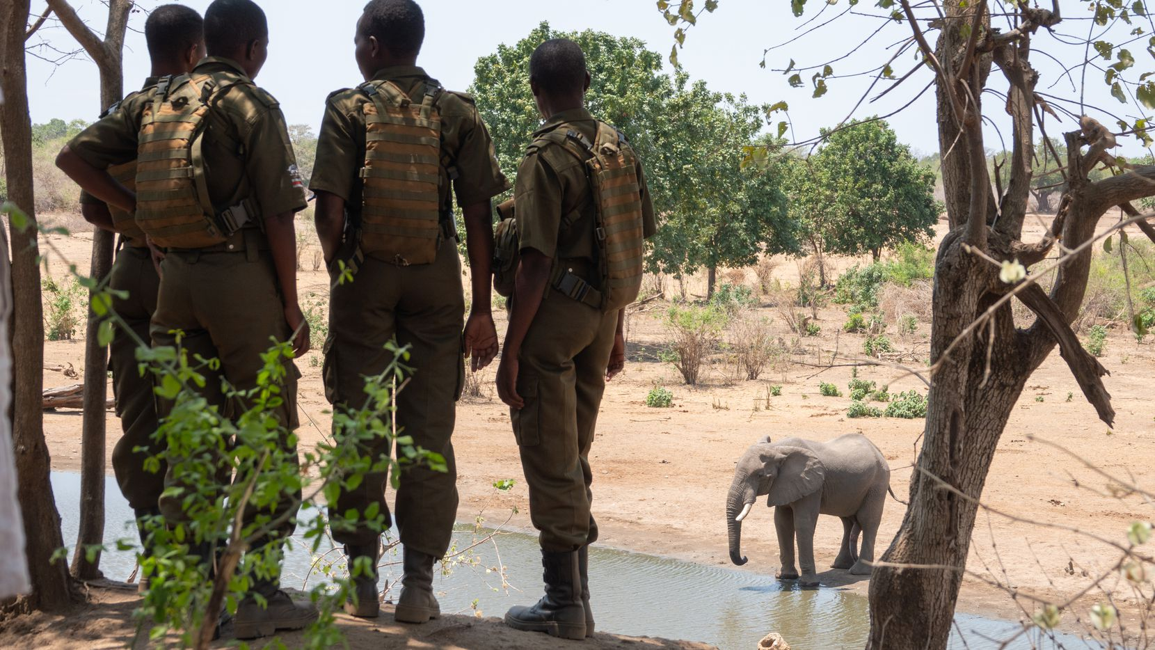 """The film """"Akashinga"""" about Zimbabwe's all-female troop of elephant protectors will be shown online during EarthX's virtual festival, Earthx2020."""