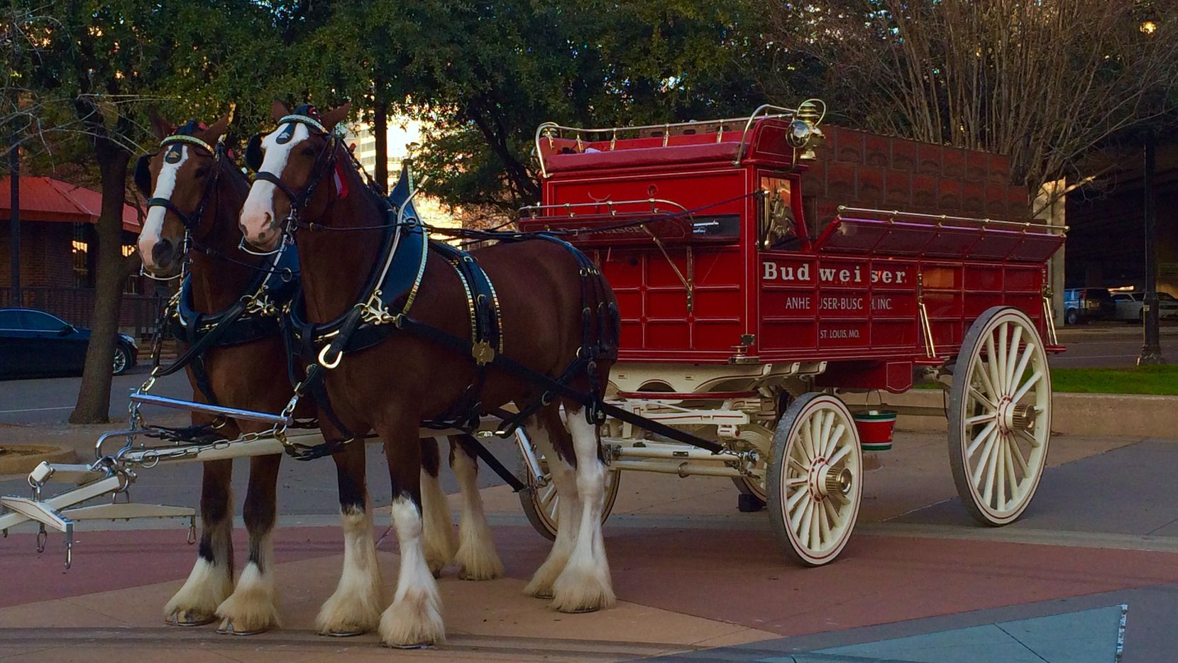 The Budweiser Clydesdales are in town to promote the Anheuser-Busch conference happening next week.