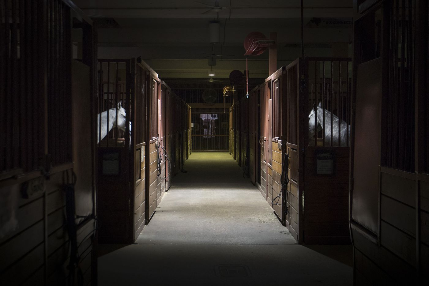 Horses are seen in darkened stables at the State Fair of Texas.