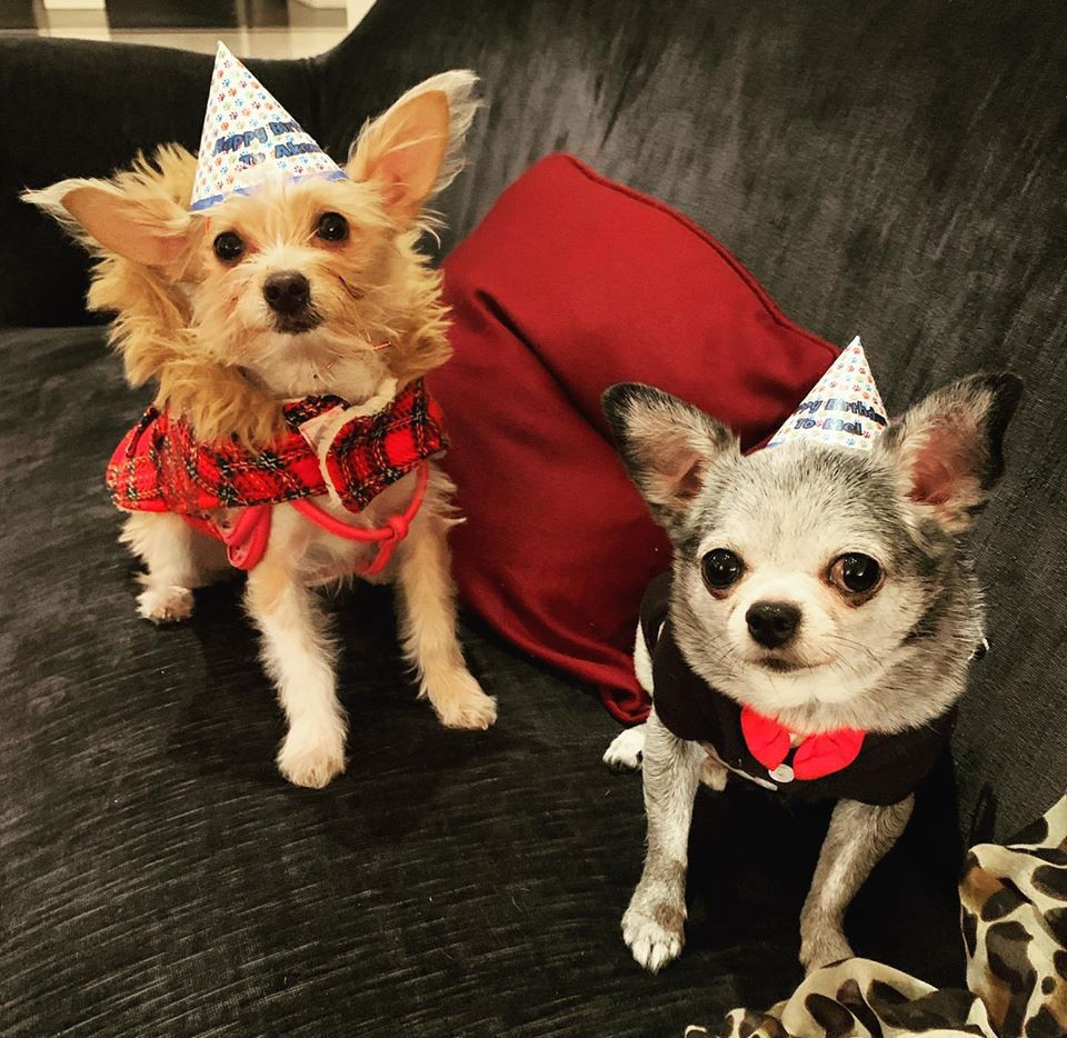 Help shop dog Akeem (right) celebrate his birthday this weekend at Homegrown Hounds Dog Deli and Bakery.