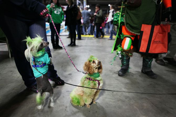 Vamparilla (left), a Chinese crested, and Xanadu, a mini poodle, were  decked out in green for the North Texas Irish Festival at Fair Park. (2013 File Photo/DMN)