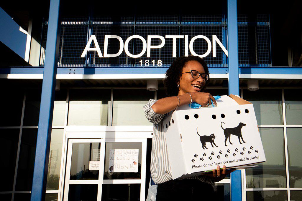Amanda Pearson heads to her car with a carrier containing her new chihuahua after adopting the dog from the Dallas Animal Services & Adoption Center on Monday, June 11, 2018, in Dallas. Pearson adopted Angel, a 5-year-old chihuahua that had been microchipped, after the dog completed a 10-day hold waiting for its owner to retrieve the animal from the shelter, but the owner never showed.
