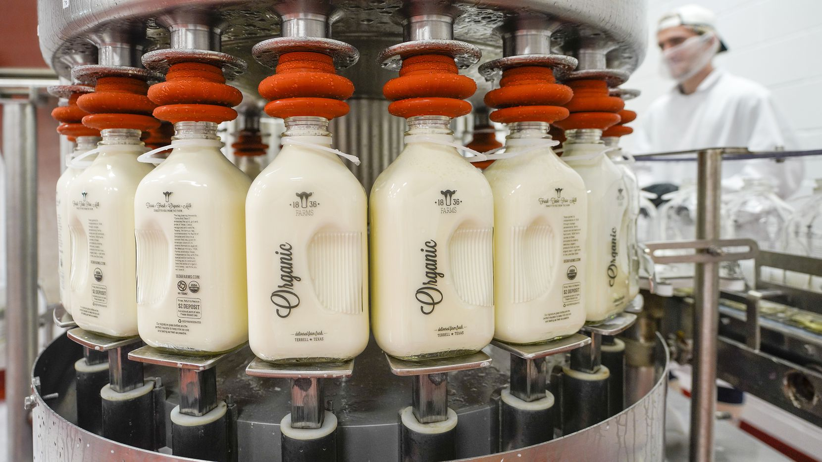 Glass bottles are filled with milk at 1836 Farms' creamery in Terrell.  The company bought and renovated an abandoned building in Terrell and redeveloped it into a production facility.