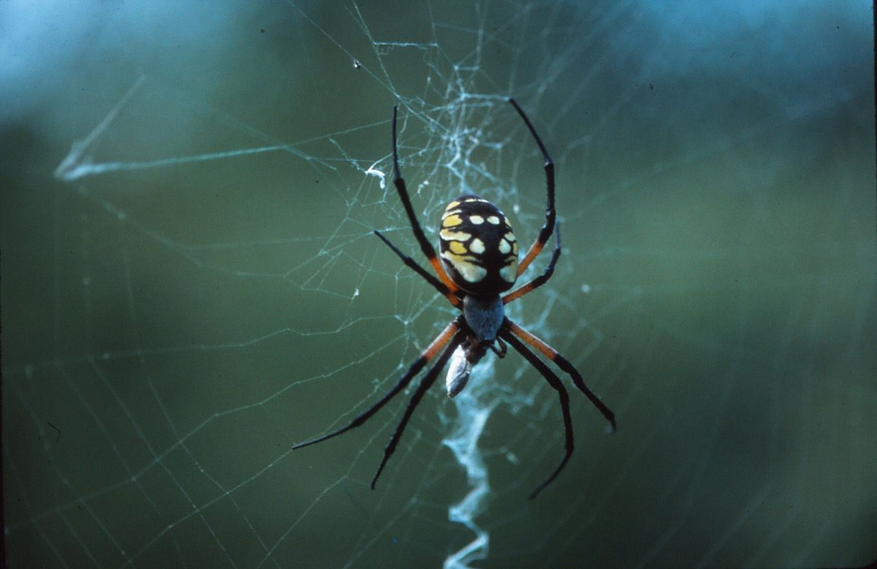 Arlington's River Legacy Nature Center will welcome 100 live arachnids to a new exhibit opening next month.