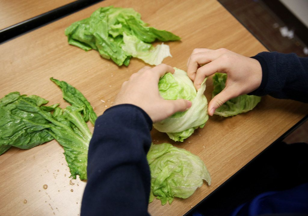 Junior Brice Chen rips into a head of lettuce during a meeting of The Lettuce Club at Heritage High School on Tuesday in Frisco.