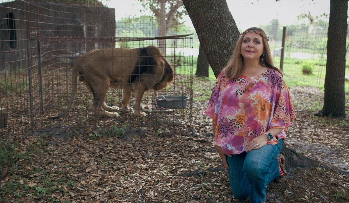 Big Cat Rescue Corp. fue fundado por Don Lewis y Carole Baskin en Florida.