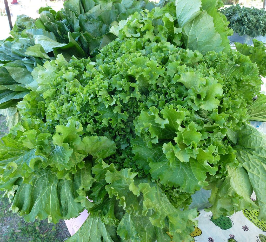 Crawford Farms has lots of greens, including these mustard greens, at the Public Farmers Market in East Garland.