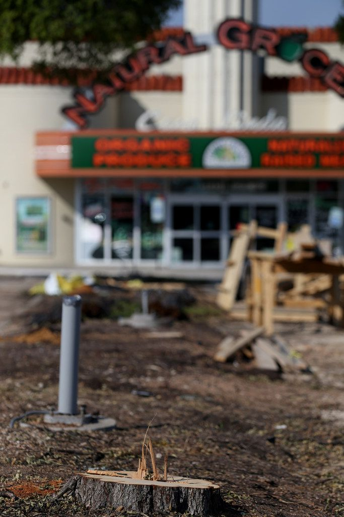The trees were removed Monday at Casa Linda Plaza, billed as the third-oldest shopping center in the U.S.
