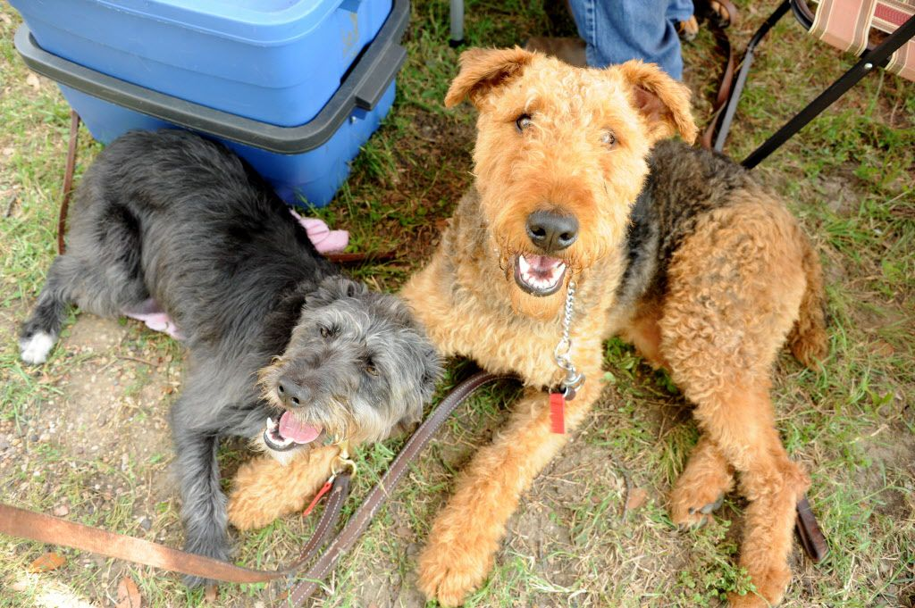 Ziggy and his friend Skittles relax at the 21st annual Dog Day Afternoon at Flagpole Hill in Dallas, TX on June 6, 2015.