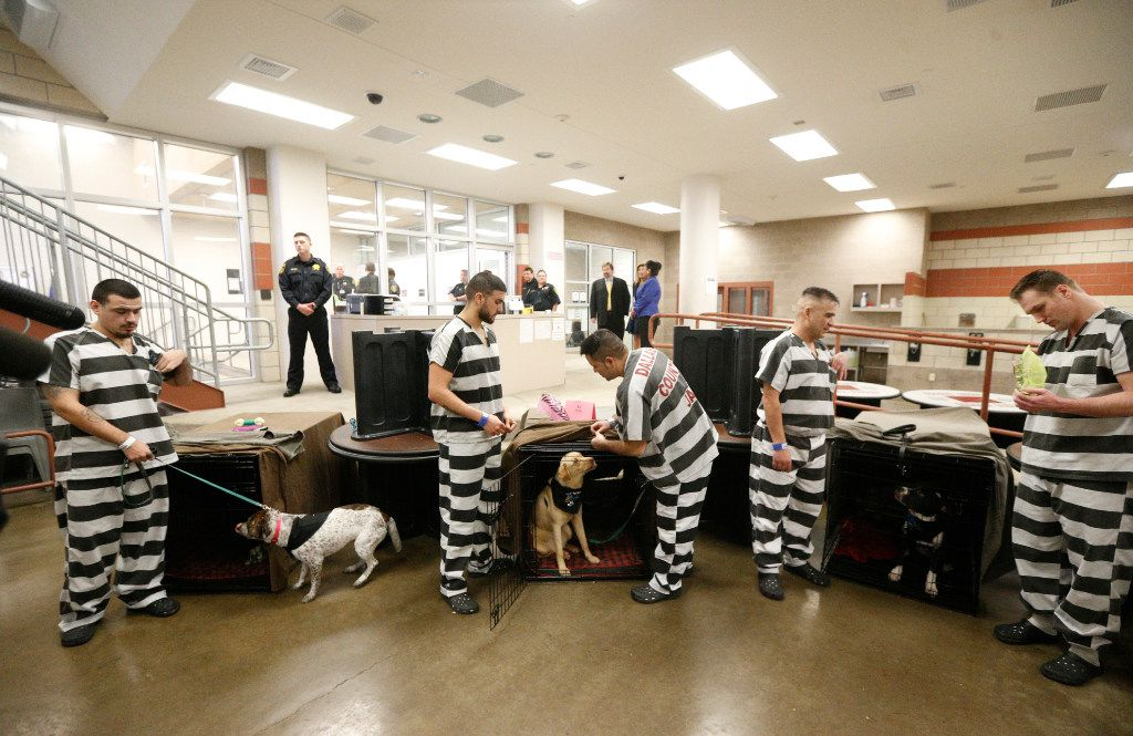 Dallas County inmates get ready to show off their dogs before a press conference to talk about the new job skills/empathy-boosting program at Kays Tower Jail in Dallas on March 29, 2017.