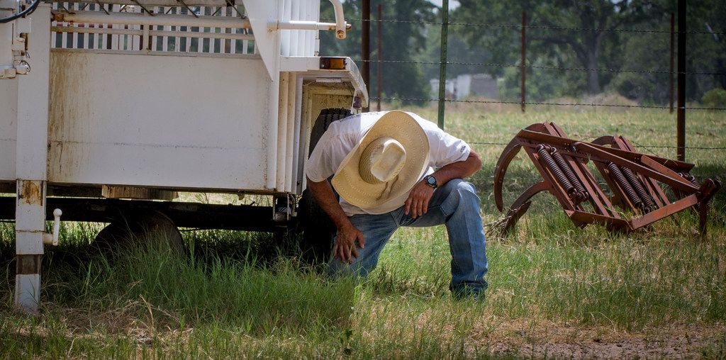 Mike Newton, known as the Cowboy Chef, tries to coax the family pet pig, Hamilton, Hammy for short, out from under a stock trailer at his ranch house in Lipan, Texas on July 17, 2018. (Robert W. Hart/Special Contributor)
