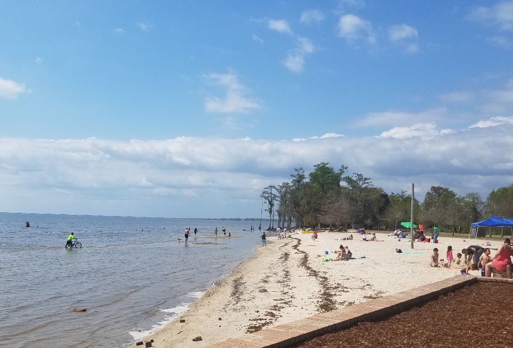 Fontainebleau State Park in Mandeville, half an hour from Covington, La., is a great spot to take a picnic lunch from Covington Farmers Market. It offers a beach, a pier and a pond in which an alligator luxuriates.