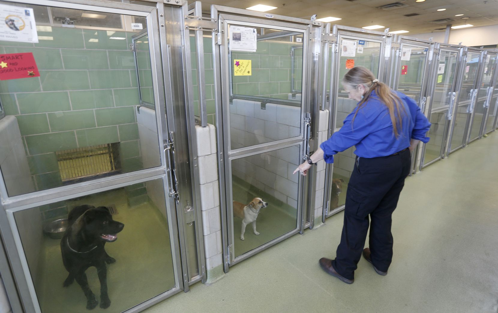Employee Cheryl Sommerfield tends to dogs at Dallas Animal Services.