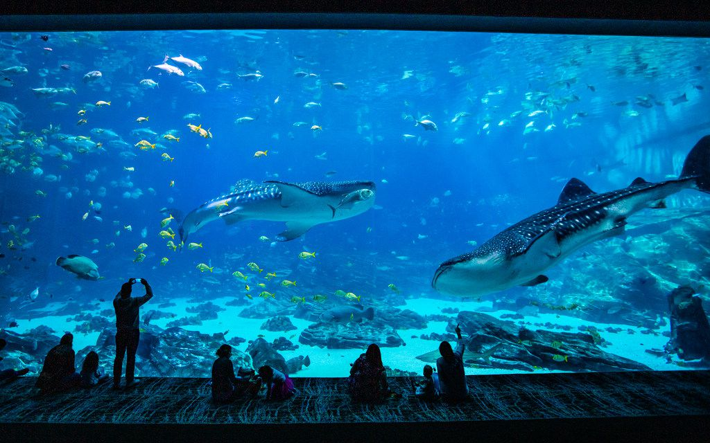 The Georgia Aquarium in downtown Atlanta is America's biggest and best.