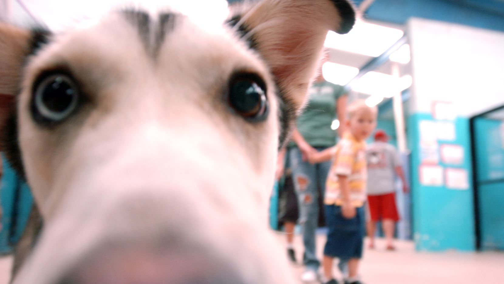 The Allen Animal Control and Shelter's goal this year is to initiate a spay-neuter program, a shelter advisory official told the Allen City Council on Tuesday. (File photo)