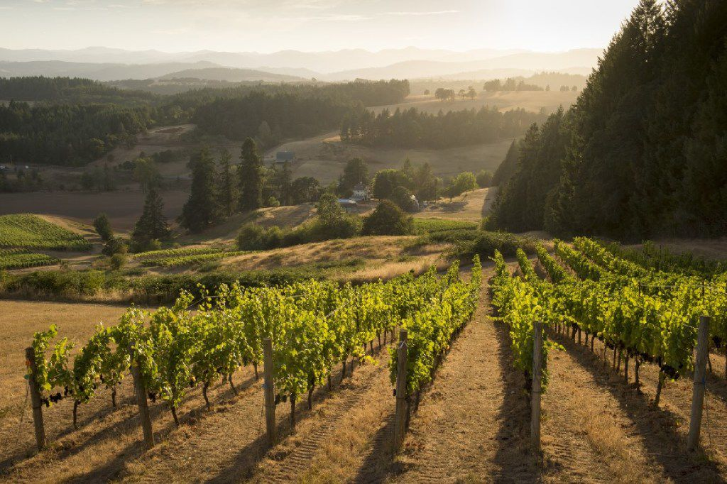 Domaine Nicolas Jay grapes come from their estate vineyard, Bishop Creek Vineyard in the Yamhill Carlton AVA of the Willamette Valley.