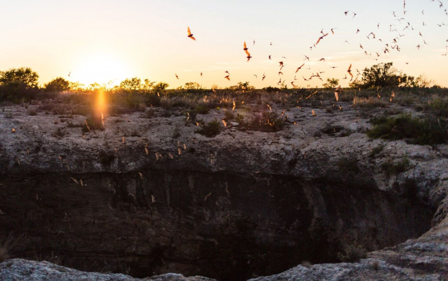 Bats fly out of a cave on Monarch Ranch.