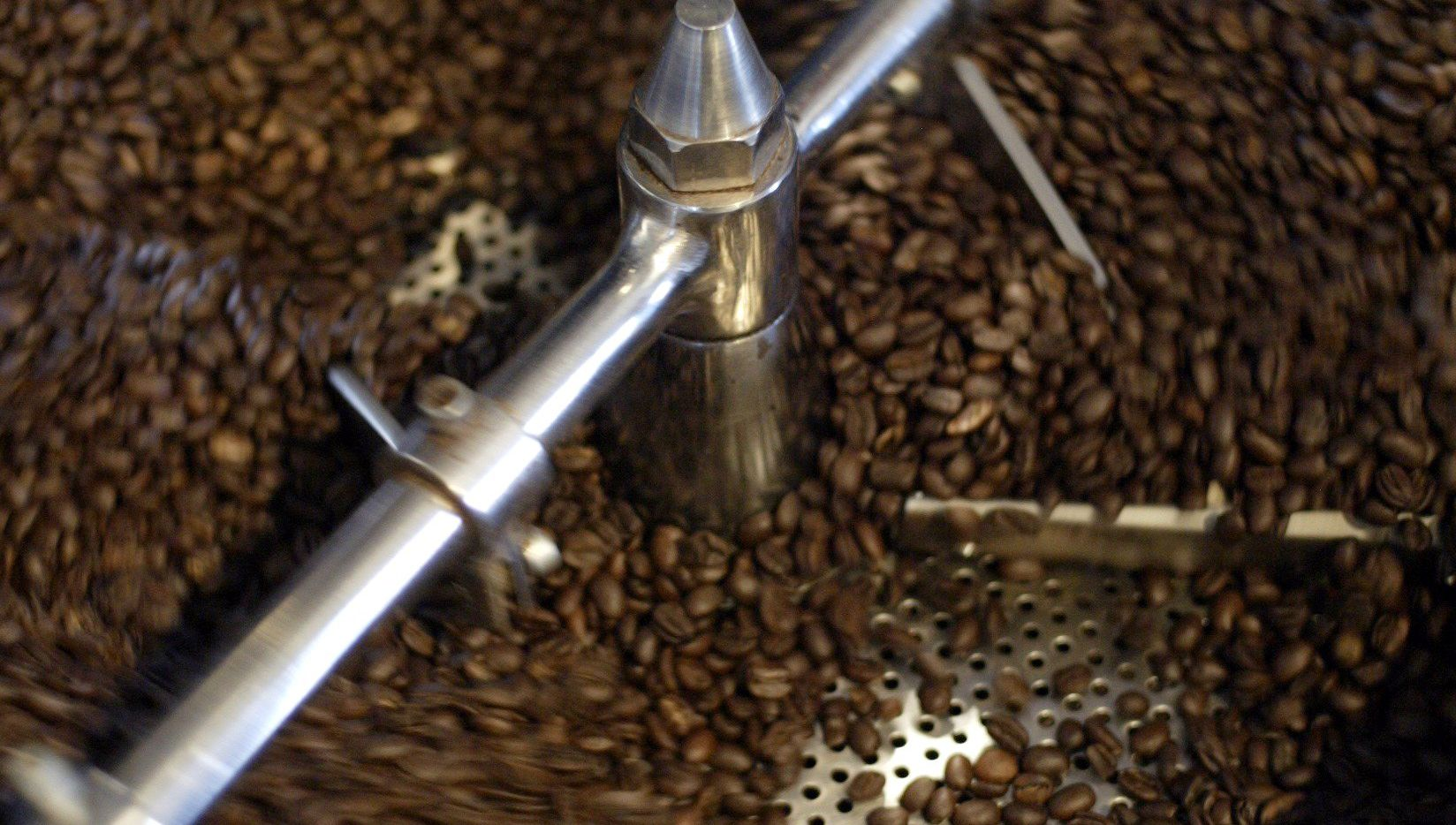 White Rock Coffee's finished roasted beans are placed in a tray with rotating arms to cool.