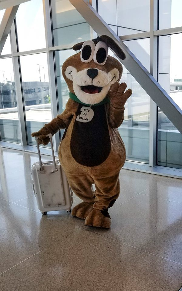 The star of the Shark Tank competition, DAS mascot Rudy, prepares to take off from Love Field for New Orleans last week.